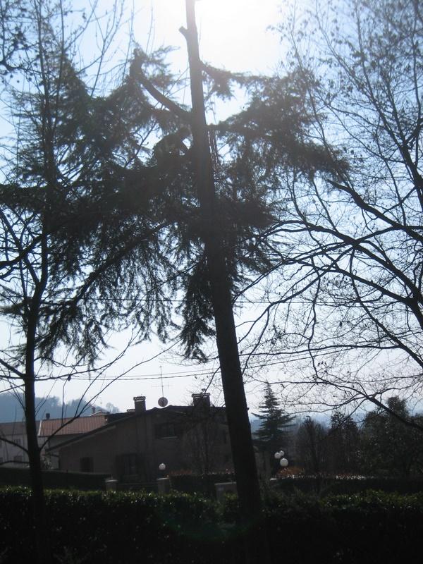 Abbattimento albero pericoloso
