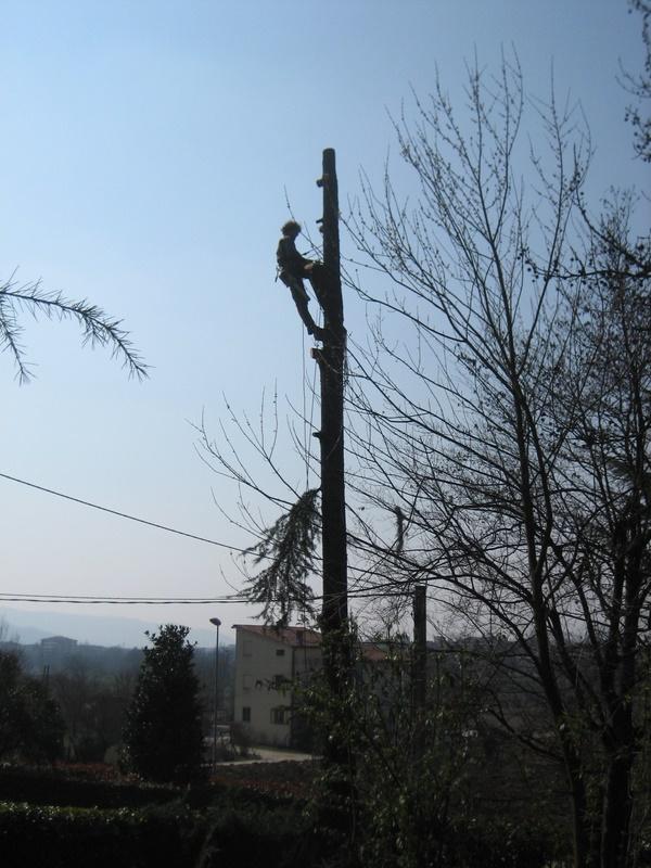Abbattimento albero in sicurezza