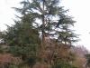 Albero potato con tecnica tree climbing