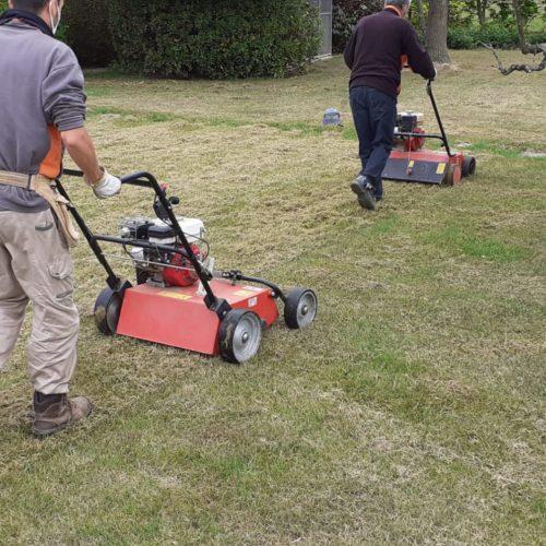 semina e cura del tappeto erboso