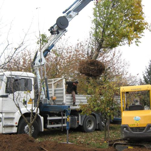 Piantumazione alberi a Vicenza