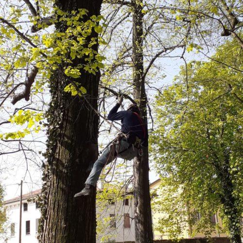 Tree climbing Vicenza