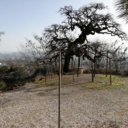 Potatura autunnale alberi piante
